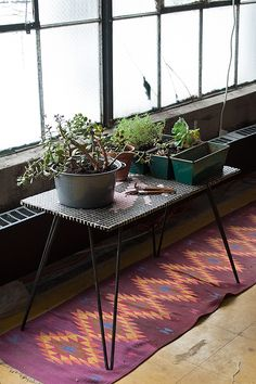 Sneak Peek: Best of Indoor Plants. Amelie Mancini keeps a plant table (complete with small tools) in her Brooklyn studio. #sneakpeek
