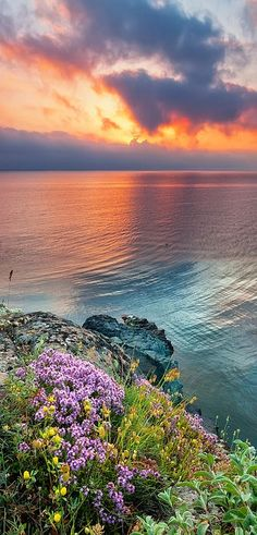 Sunrise - wild thyme by the sea