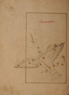 Cygnus (al-dajajah), the swan. (Constellations of the northern hemisphere). Kitab suwar al-kawakib al-thabita (Book of the Images of the Fixed Stars) of al-Sufi