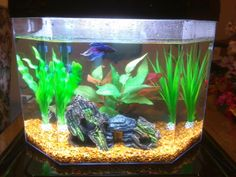 What a cute betta fish home! #betta #fish