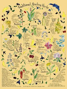 Original poster states:  Traditional Healing Herbs illustration reminds me of a nature walk I took in Hot Springs, Virginia last month, a steep 2 mile hike up to a mountain top was sprinkled with signs explaining the medicinal uses of every tree you passed.