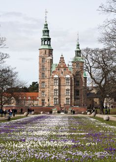 Copenhagen - Crocus Bloom Rosenborg Castle
