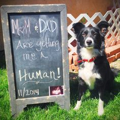 Baby announcement with pet dog