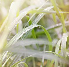 Zachte gras-natuurfotografie - natuur foto-cottage tuin-Lente-Lente foto (5 x 7 originele fotografie Kunstwerkafdrukken) gratis verzending)
