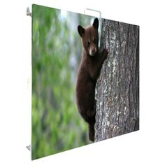 SGR led displays animals world Fox, Display, World, Animals, Floor Space, Animales, Billboard, Animaux, Animal