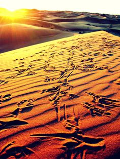 "Favorite Overall Photo    Lindsay Stoll (Valencia Fall 1), University of Nebraska, Lincoln. ""Bird Tracks"" Sahara Desert in Morocco, Africa    This is a picture of bird tracks on a sand dune in the Sahara during the sunrise."
