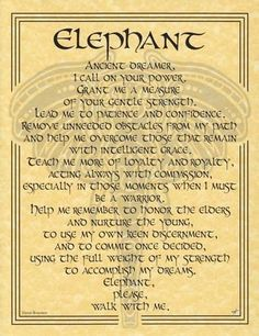 The Elephant Prayer poster celebrates the wisdom, gentle strength and majesty of the Elephant, whose example can help us forge forward into our lives, and whose guidance can teach us every day. Exact why I got the tattoo! Tarot, Reiki, Elephas Maximus, Animal Spirit Guides, Elephant Love, Elephant Quotes, Elephant Spirit Animal, Elephant Stuff, Baby Elephants