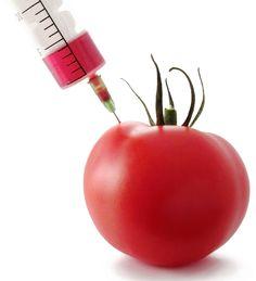 ΕΛΛΗΝΙΚΑ ΠΡΟΙΟΝΤΑ: Γενετική διαστροφή στην διατροφή: Ντομάτες μακράς ...
