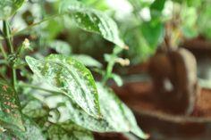 Plantas de interior maceteros de botellas dise o con plantas - Plantas ornamentales de interior ...