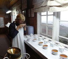 Teatasting #dinatea