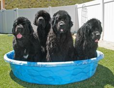 Water Rescue...dogs