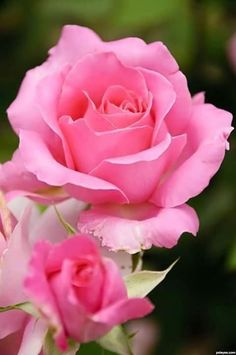 Zdjęcie użytkownika Charming Flowers.