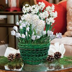 Great Grand Winter White Bulb Garden: Ensure Yourself Or Someone Else A White  Holiday Season,. Garden GiftsWinter White.