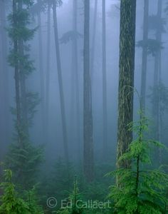 #Mist #Forest