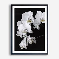 """Orchid"" Art Print By The Print Emporium      THEPRINTEMPORIUM.COM.AU  #ThePrintEmporium #flowers #floral #floralart #flower #art #framedprint #wallart  #white #beautiful #painted #beautiful #print #scandinavian #scandi #minimalist #painting #decor #artwork #artprint #poster #orchid"