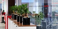 An avenue of Ficus Ginseng and Beaucarnea Nolina desk top plant displays in a corporate headquarters where space is at a premium and the corporate colours are black and red