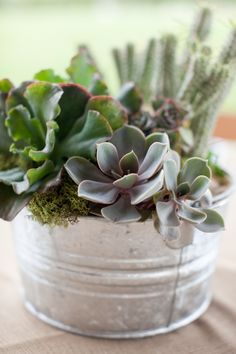 Succulents are the perfect centerpiece for a Hill Country Wedding in Texas!
