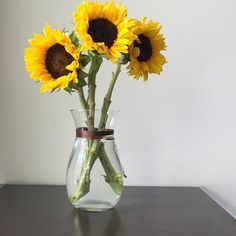 Sunflowers (Helianthus annuus) add boldness and rich color to cut flower arrangements. Fragrance-free, sunflowers are a good choice for indoor areas where a strong perfume can be. Sunflower Vase, Sunflower Images, Sunflower Arrangements, Sunflower Bouquets, Vase Arrangements, Vases, Dwarf Sunflowers, Dried Sunflowers, Growing Sunflowers