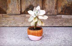 Yosi suculove! #cactusysuculentas #cactus #cacti #cactuslover #cactilove #suculentas #succulents #succulove #market #malasaña #dosdemayo #dosde #plazadosdemayo #madrid