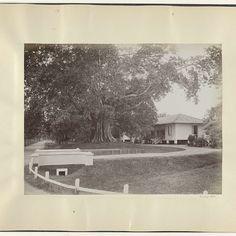Oprijlaan naar een villa in Nederlands-Indië, anonymous, c. 1895 - c. 1905 - Rijksmuseum