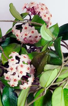 Unusual Flowers, Happy Flowers, Indoor Plants, Planting Flowers, Succulents, Wax, Floral, Nature, Handmade
