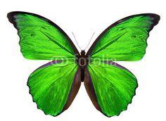 Stampa su tela Green butterfly. #stampa su #tela