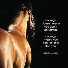 Cute Quotes For Girls Country Cute Horse Quotes, Rodeo Quotes, Equine Quotes, Inspirational Horse Quotes, Horse Riding Quotes, Cowboy Quotes, Cowgirl Quote, Equestrian Quotes, Cute Quotes