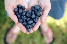 Consider a handful of Blueberries for a nice dose of antioxidants, vitamins and minerals. They're one of our favorites for prevention of cancer, high cholesterol, brain damage, and age-related health diseases. Their anti-aging effects are a nice added bonus.
