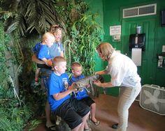 Destin Florida Vacation  |  Live Alligator Exhibit  |  Fudpuckers Live Alligators  |  Feeding Alligators  |  Rare Albino Alligator  |  Florida Vacation  |  Things To Do In Destin