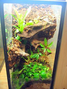 Click the image to open in full size. Planted Aquarium, Aquarium Fish, Tarantula Habitat, Crested Gecko Vivarium, Frog Habitat, 3d Background, Animal Projects, Reptiles And Amphibians, Plants