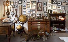 victorian naturalist decor - Google Search