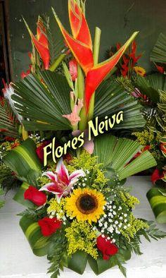 Las 20 Mejores Imágenes De Flores Neiva Colombia En 2017