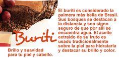 #Buriti #natura #ekos