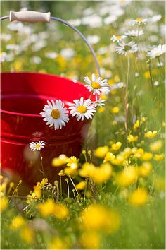a sunny day and a red basket……….. (Brigitte Lorenz)