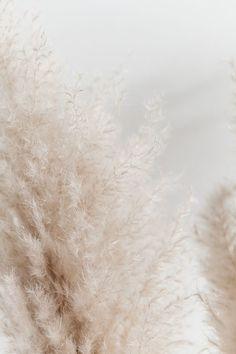 I love the soft, texture and natural hue Wallpaper Flower, Beige Wallpaper, Wallpaper Backgrounds, Iphone Backgrounds, Aztec Wallpaper, Screen Wallpaper, Iphone Wallpapers, Cream Aesthetic, Aesthetic Food