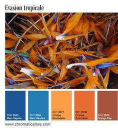 Le bleu et le orange sont des teintes complémentaires et peuvent donc agréablement s'harmoniser. Il conviendra toutefois de choisir une des deux teintes en dominante et de saupoudrer quelques touches de l'autre. www.chromaticstore.com