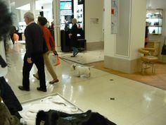 elegant doggy shopping in Au bon Marché Paris
