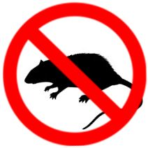 Rodents Mice Rat Pest Control Services Mice And Rats Pose Many Threats To You Your Family And Your Home When T Pest Control Roaches Pests Rat Pest Control
