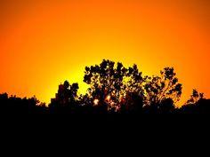 Tree, Building, Sun, Sunset, Sky