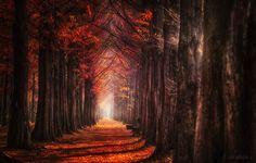 Autumn Light by Jaewoon U - Photo 130688975 / 500px