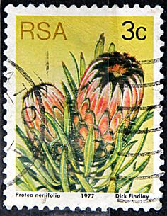 Republic of South Africa.  PROTEA NERUFOLIA.  Scott 477 A191, Issued 1977 May 27,  Lithogravured, Perf. 12 1/2, 3c.