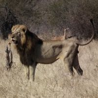 A Visit to the Game Reserve – Kruger National Park a great read, click on the picture
