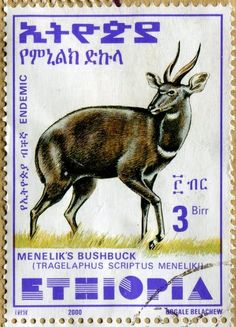 Menelik's Bushbuck (Tragelaphus scriptus Meneliki). Endemic to Ethiopia . Ethiopian stamp, circa 2000