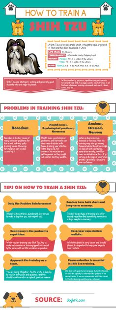 How to Train a Shih Tzu #dogs #ShihTzu