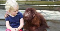 http://www.heroviral.com/gorillas-reunion/