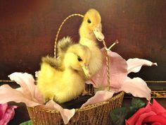 Vintage Taxidermy Ducklings by b746395 on Etsy, $60.00
