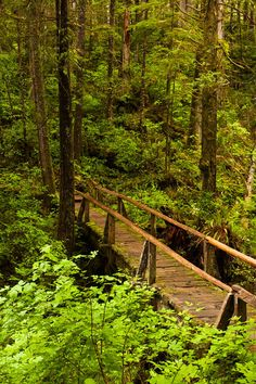 Ozette Trail, Olympic National Park, Washington (WA), USA