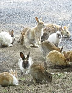 Rabbits, rabbits, everywhere! Even though it was pouring rain on the day we were there, the stalwart bunnies did not falter in their mission to beg their weight in bunny snacks.
