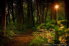 Blitz im Wald