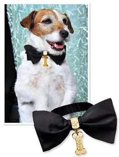 And the winner of the night's best bow tie goes to… Uggie! The adorable star of The Artist stole the spotlight during the movie's Best Picture win at the 2012 Academy Awards with his custom 18-karat gold and silk bow tie by Chopard.